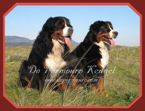 Cachorros de Boyero de Berna